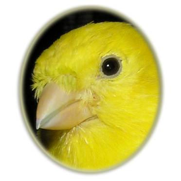 Canary Respiratory Systems & Mite FAQs